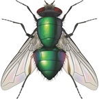 Blowfly - Pest Control - Bayer
